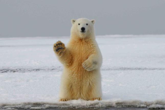 Der komplette Gamechanger! Wenn am Montag der Bär steppt... Ad-hoc am Wochenende - wallstreet-online
